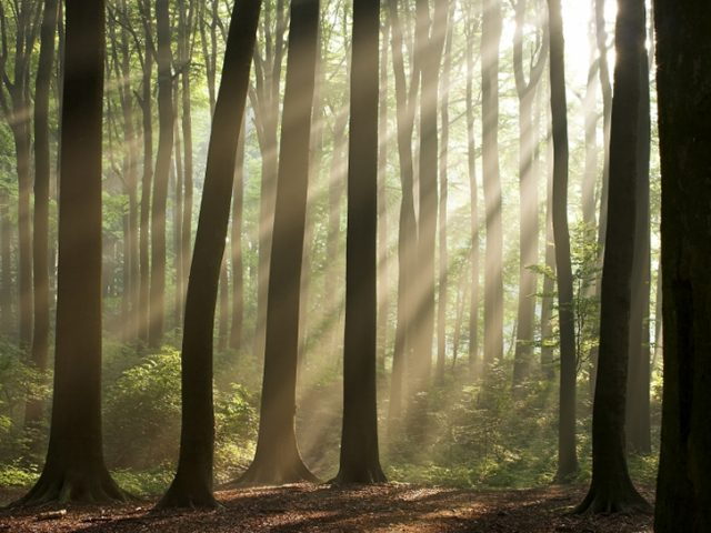 Sex im Wald